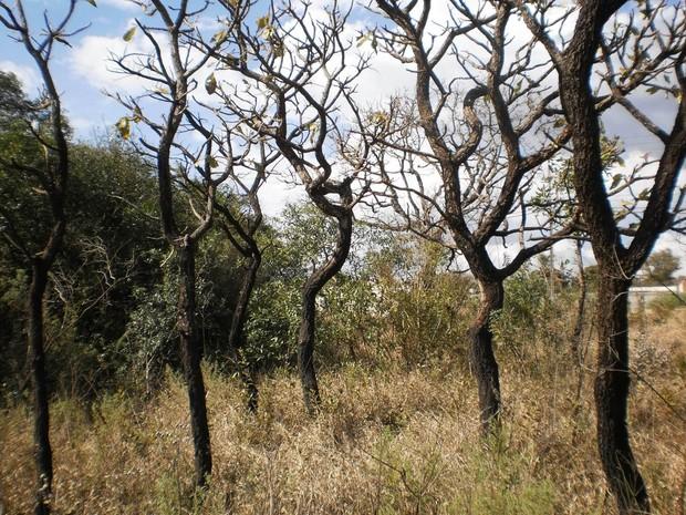 Cerrado em Campo Mourão, hoje, é quatro vezes menor do que há 5 mil anos (Foto: Arquivo/Lepafe)