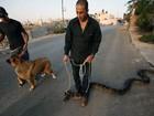 Veja donos passeando com cobra e outros animais exóticos na coleira