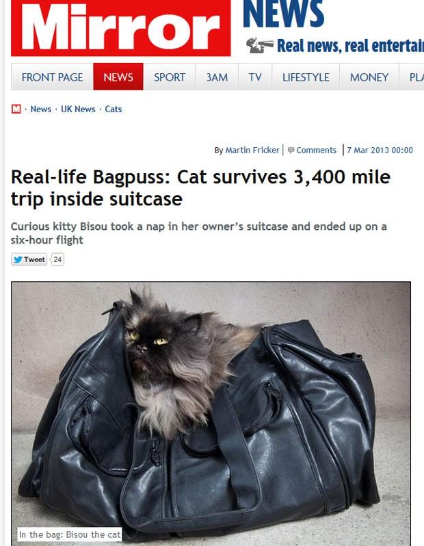Gato viajou acidentalmente 5.471 km na bagagem de sua dona entre o Egito e o Reino Unido (Foto: Reprodução)