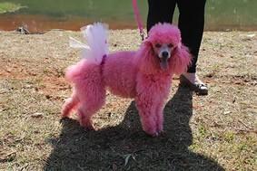 Concurso de cães (Foto: Reprodução)