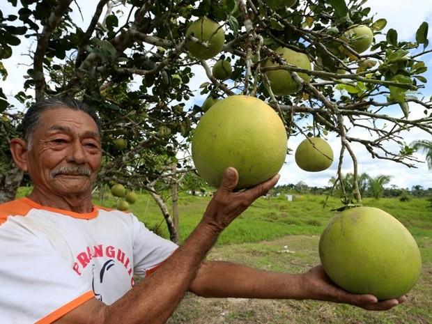 Produtor Geraldo exibe laranja de sua propriedade (Foto: Gleilson Miranda/ Secom Acre)