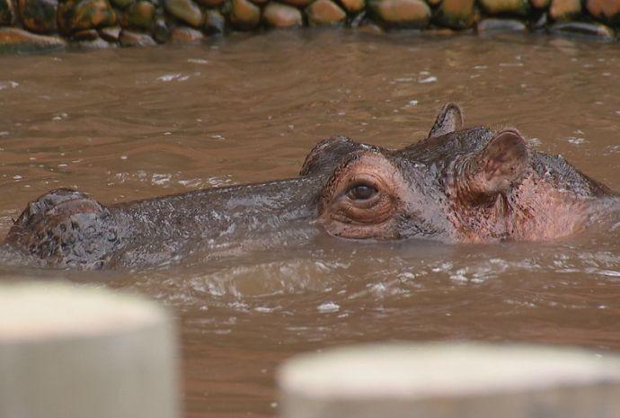 Animais colaboram com os ensinamentos educacionais do zoológico (Foto: Reprodução / TV TEM)