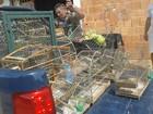 Policiais ouvem canto e descobrem cativeiro ilegal de pássaros no DF