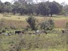 Proprietário rural é multado por usar área de preservação ambiental em MG