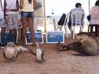 Praia de Stella Maris recebe exposição de animais marinhos no sábado