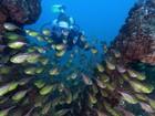 Mergulho na Baía de Todos-os-Santos e em cavernas são dicas para turistas