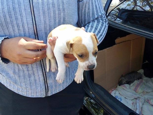 Ambulante oferece filhote de Pitbull que estava dentro de porta-malas de carro na feira do Sia (Foto: Weldson Medeiros/ G1)