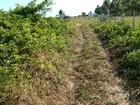 IMA multa Associação de Bugueiros de Maragogi por crime ambiental
