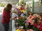 Expoflor, de Umuarama, tem cem opções de plantas até o domingo