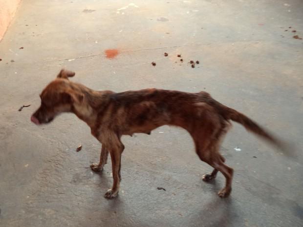 Cadela adulta foi encontrada bastante debilitada  (Foto: Divulgação/ Polícia Ambiental)