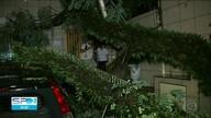 Árvore cai, atinge carro e deixa 30 pessoas isoladas dentro de prédio na zona sul de SP