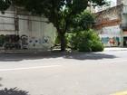 Parte de árvore cai em calçada na avenida Nazaré, em Belém