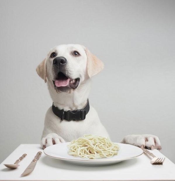 Segundo estudo, a facilidade dos cães em digerir amido facilitou o processo de domesticação (Foto: Lauren Solomon, iStockphoto, Nicholas Moore/Nature)
