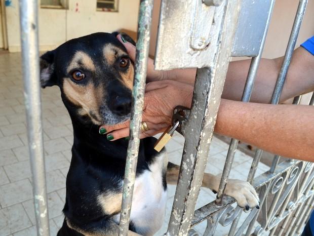 Dona de casa acaricia cadela abandonada em Piracicaba (Foto: Fernanda Zanetti/G1)