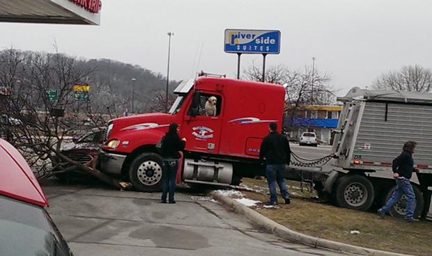 Cachorro 'motorista' provoca acidente com caminhão nos EUA (Foto: David Stegora via AP)