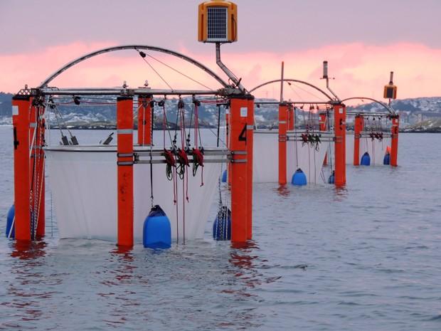 Foto mostra gaiolas flutuantes na costa oeste da Su�cia que s�o usadas para estudar a sa�de do oceano.  (Foto: AP Photo/Geomar)