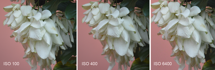 Em ambientes com bastante luz, o ISO não precisa ser aumentado, pois causa ruídos na imagem, como na última foto (Carol Danelli/TechTudo)