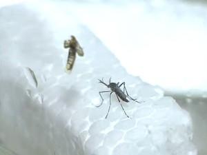 São José quer criar rede de voluntários para combater a dengue (Foto: Reprodução/TV Vanguarda)