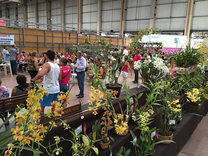 O evento reuniu mais de 300 expositores e representantes de orquidários. (Foto: TV Anhanguera)