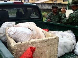 Pirarucu apreendido durante ação do Batalhão (Foto: Ana Graziela Maia/ G1)