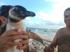 Pinguim da espcie Magalhes  encontrado em praia de Sergipe