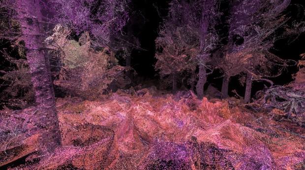 A floresta não é tão verde na visão de um animal (Foto: Divulgação)