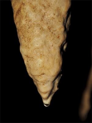 """Uma das estalagmites analisadas pelos pesquisadores em Belize (Foto: Divulgação/Douglas Kennett/""""Science"""")"""