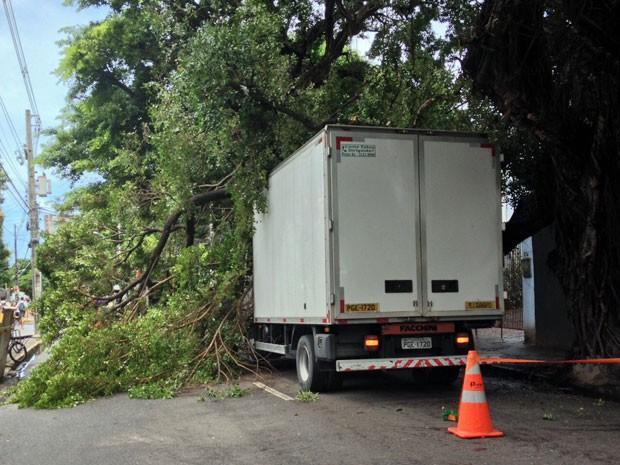 De grande porte, árvore ocupa toda a largura da via. Por isso, tráfego está interditado (Foto: Kety Marinho / TV Globo)