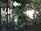 Sipam registra rajadas de ventos de 70km/h durante chuva em Manaus