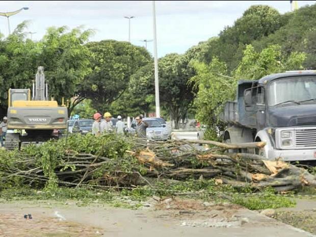 Árvores foram derrubadas em canteiro central para construção de um terminal de ônibus (Foto: China/Agência Miséria)