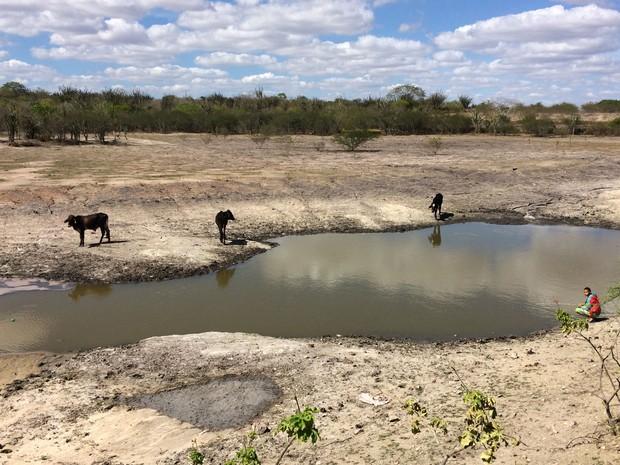 Animais também dependem da água dos tanques para sobreviver à estiagem (Foto: Henrique Mendes / G1)