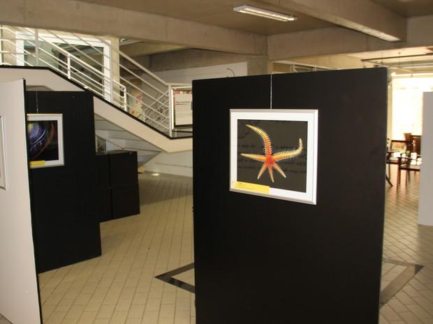 Universo microscópico pode ser conferido em exposição em Guararema (Foto: Marcos Tourinho Filho/ Prefeitura de Guararema)