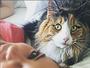 Paolla Oliveira posta selfie com gatinho e brinca: 'Meus olhos verdes'