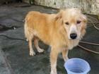 Cão abandonado por donos desperta interesse de famílias em todo o país