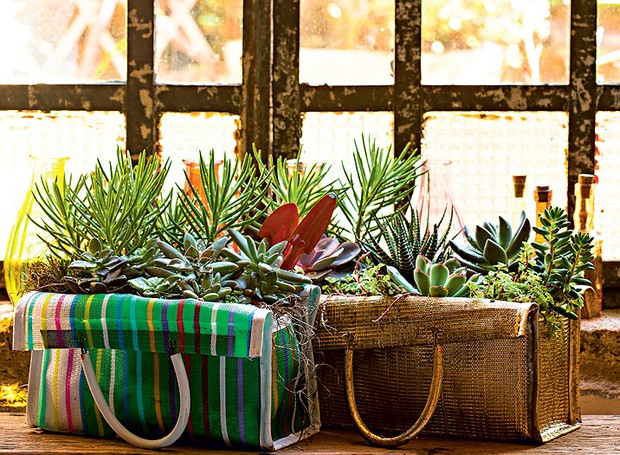 Tenha uma horta, mesmo que seja simples assim, dentro de sacolas de feira. Vale a pena e a energia das plantas é incrível (Foto: Edu Castello/Editora Globo)