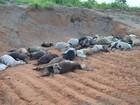 Carneiros mortos são descartados às margens de rodovia no Tocantins