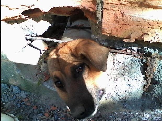 Cachorro fica entalado em buraco em Jaguaruna, Sul de Santa Catarina (Foto: Elza Medeiros Freccia/ Divulgação)