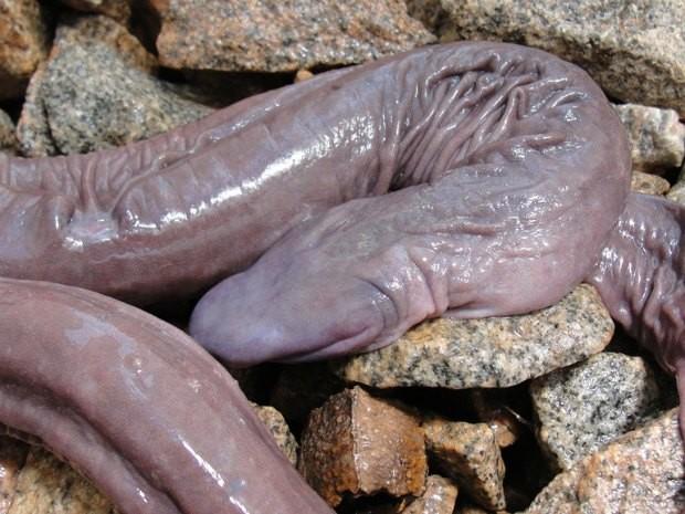 Animal raro fue descubierto por biólogos en brasil