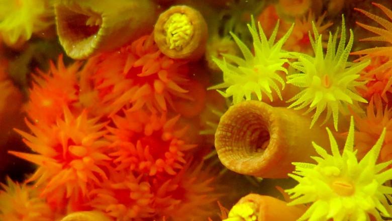 coral-biodiversidade (Foto: Divulgação/Ibama )