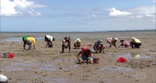 entre o mar e o mangue (Globo Repórter)