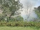 Incêndio atinge área de bambuzal no CTA em São José; veja vídeo