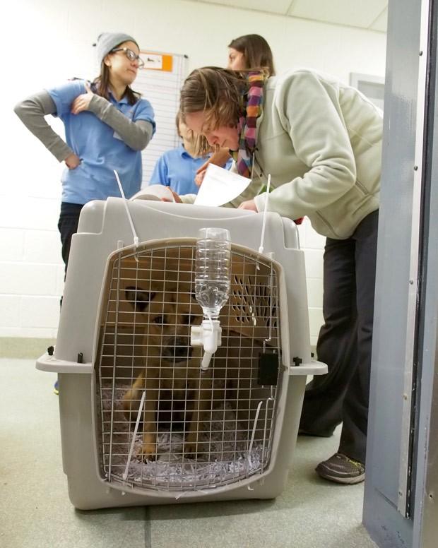 Cachorro chega aos Estados Unidos depois de ser resgatado na Coreia do Sul, onde viraria comida (Foto: AFP Photo/Robert MacPherson)