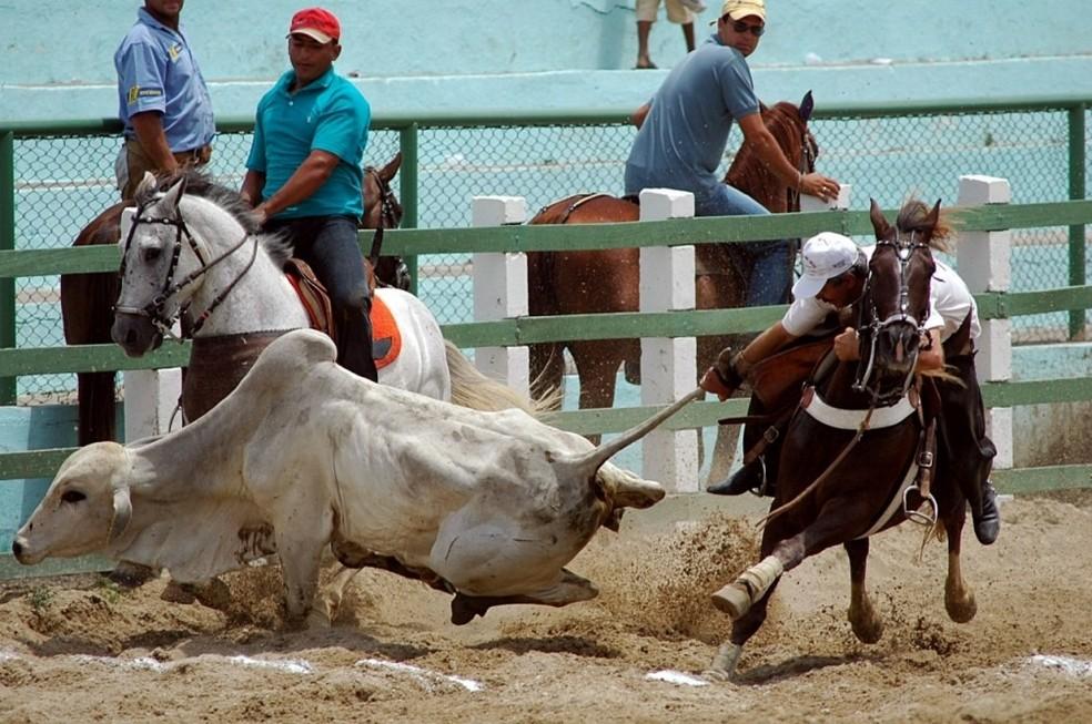 No RN, competições de vaquejada estão regulamentadas com a publicação da lei (Foto: Divulgação)