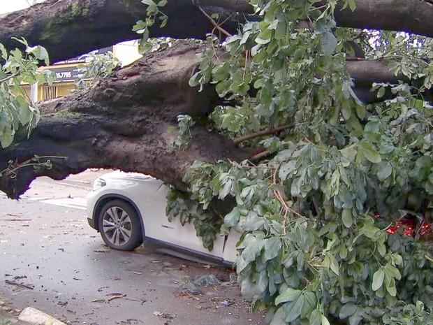 Chuva derruba várias árvores e deixa 20 mil imóveis sem luz em Goiânia, Goiás (Foto: Reprodução/TV Anhanguera)