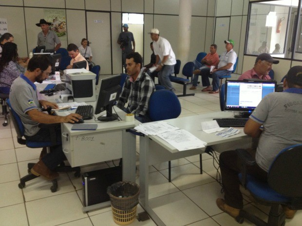 Produtores tem até o próximo dia 15 de novembro para vacinar rebanho (Foto: Magda Oliveira/G1)