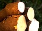 Festa da mandioca realiza concurso do maior bebedor de caxiri em RR