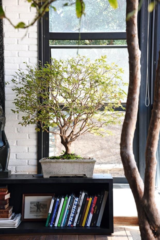 Exemplares verdes. Mesma espécie em duas versões: a jabuticabeira é cultivada em vaso (ao lado) e em bonsai centenário (Foto: Rômulo Fialdini / Editora Globo)