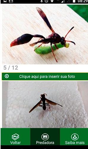 aplicativo-pragas-innat (Foto: Divulgação/Embrapa)