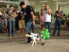 Desfile de cães é atração em Jundiaí neste fim de semana