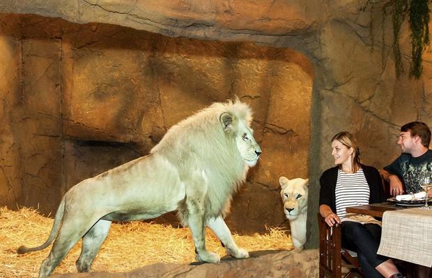 Jantando com os leões.. (Foto: Reprodução Facebook)